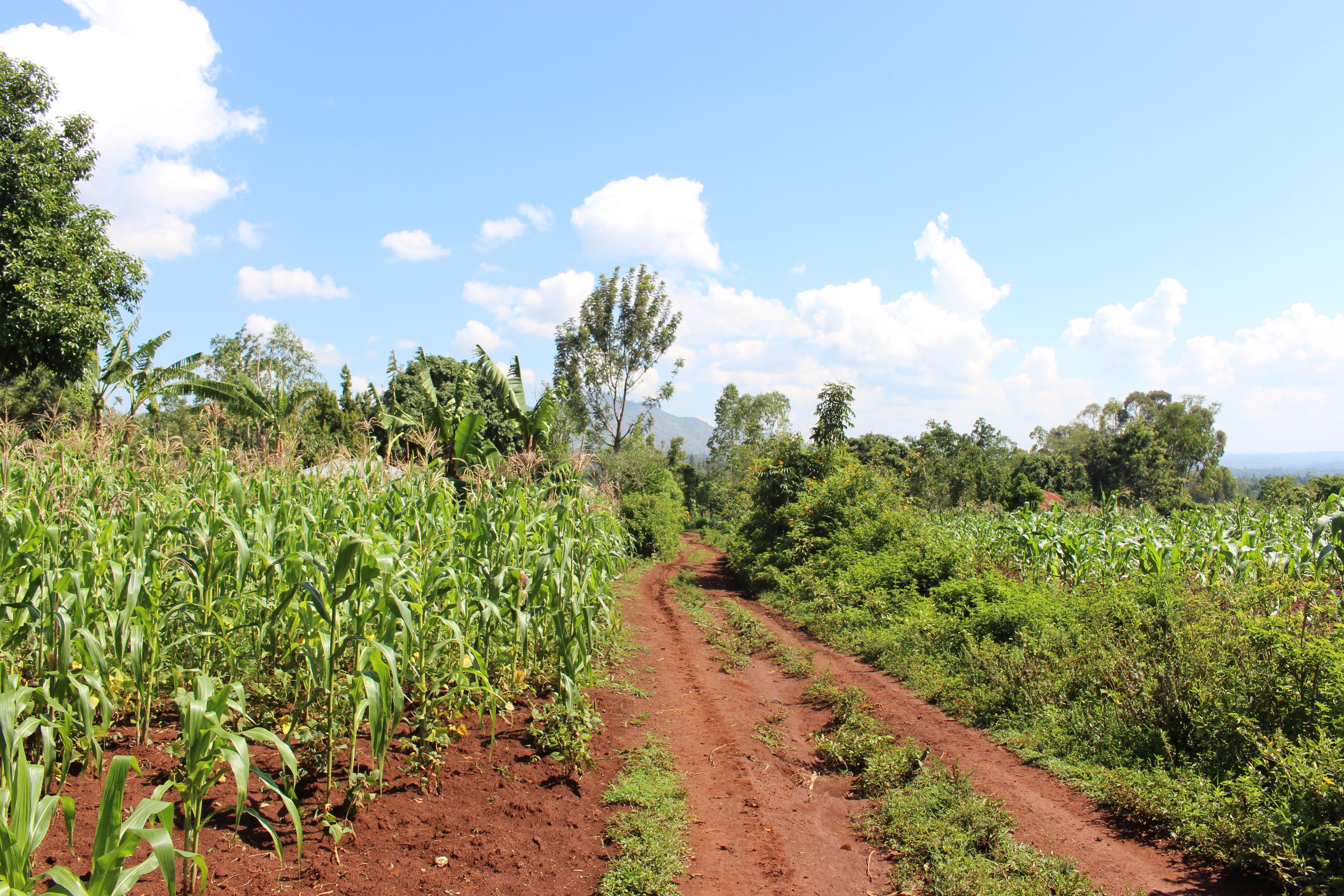 Smallholder systems on weathered soils (Kenya)